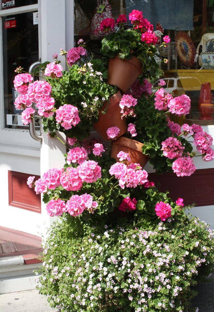 Geraniums in front of ginger grater shop