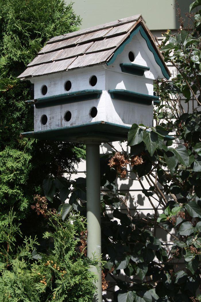 Birdhouse near shops