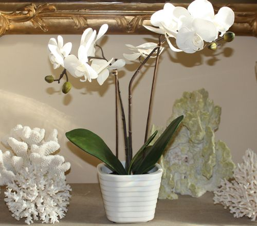 Foyer table white orchid close up
