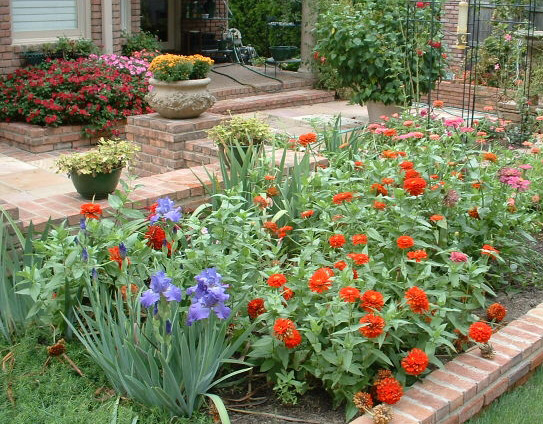 Fall Blooming Iris and Zinnias