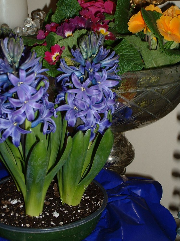 Spring flowers on console January 5 2010