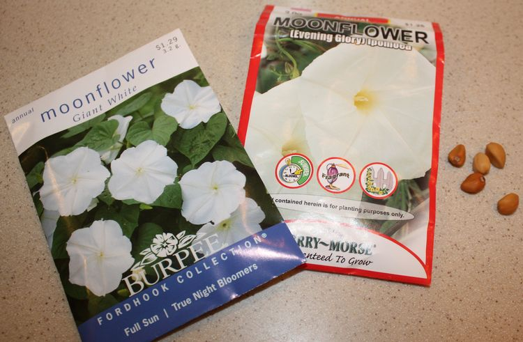 Moonflower seed packets