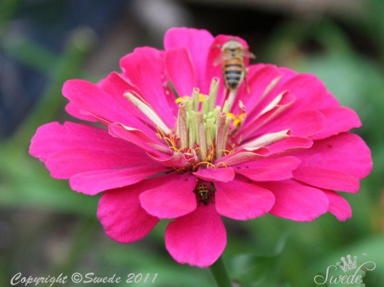 Bug and Bee 8466 V2