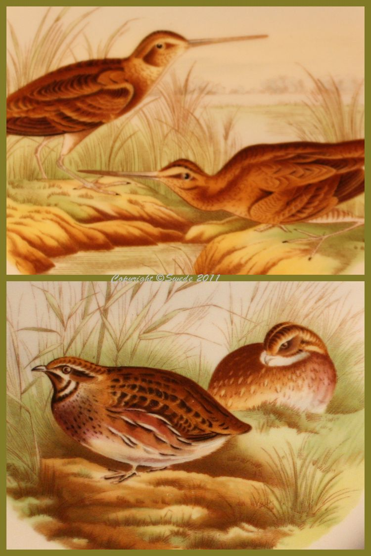 Snipe quail logo