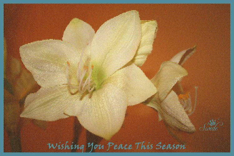 Peace blog