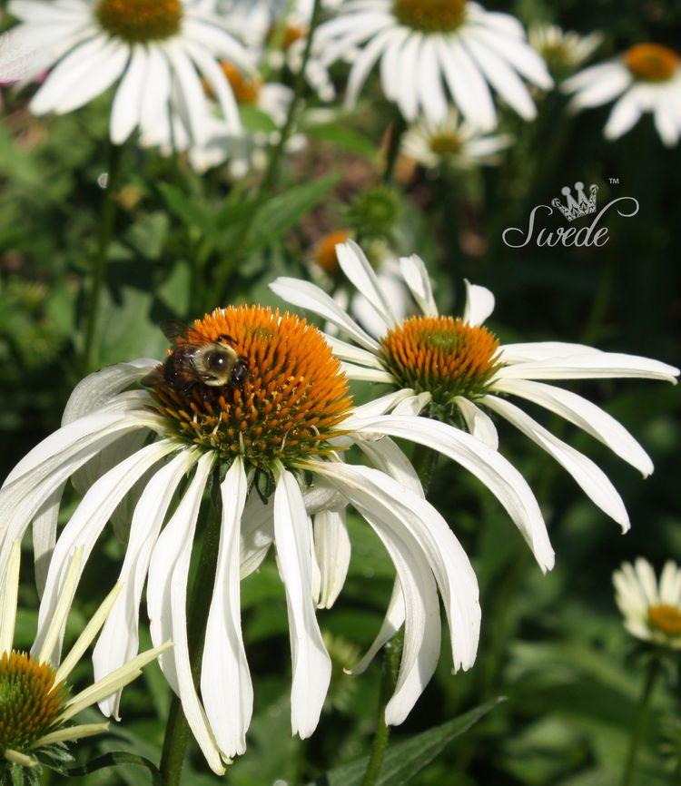 Bee visit logo