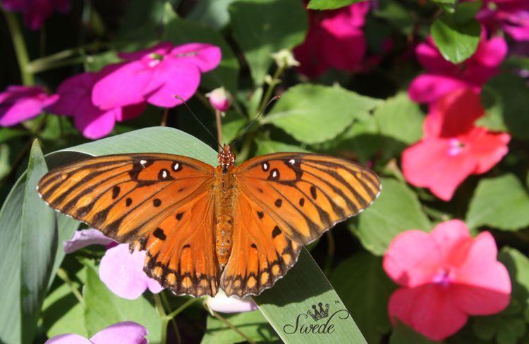 Butterfly7820