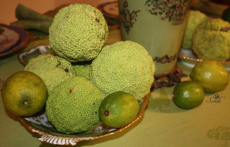 Swede Limes and OO7905