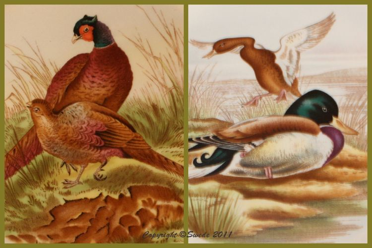 Pheasant mallard logo