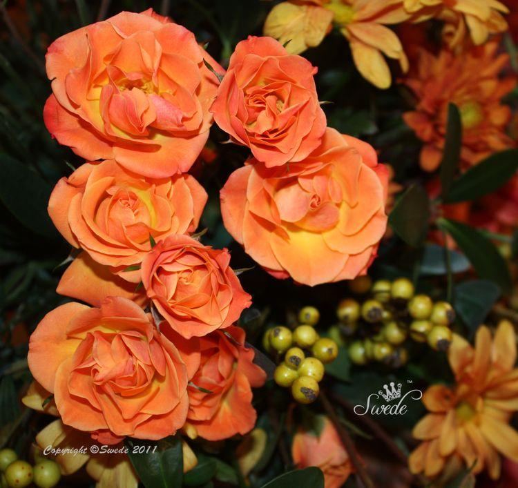 Roses 8821