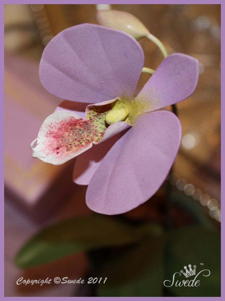 Lilac orchid logo