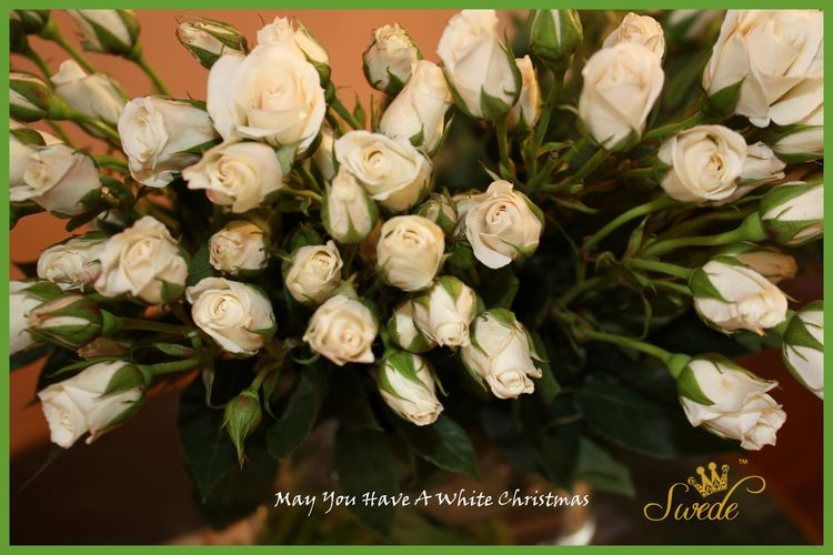 White christmas roses bright green border logo