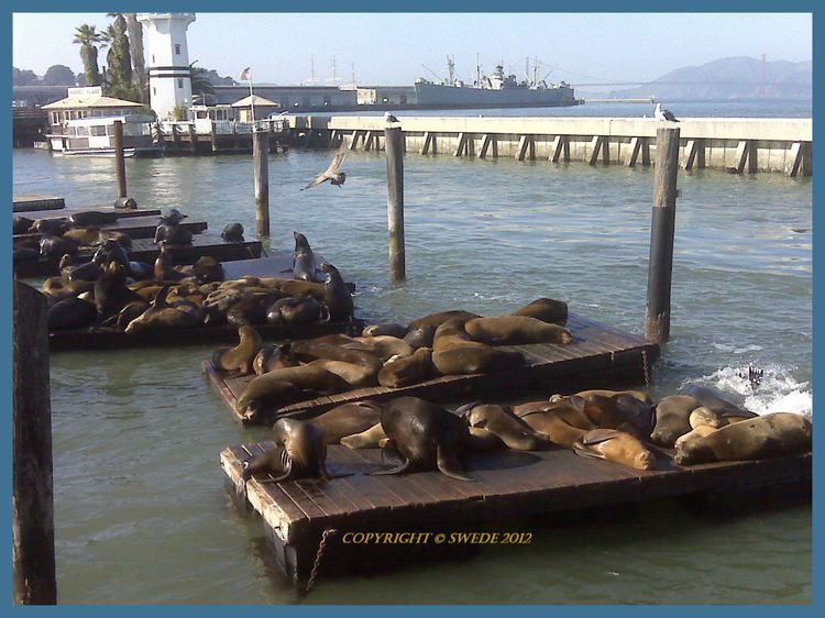 Sea lions border logo