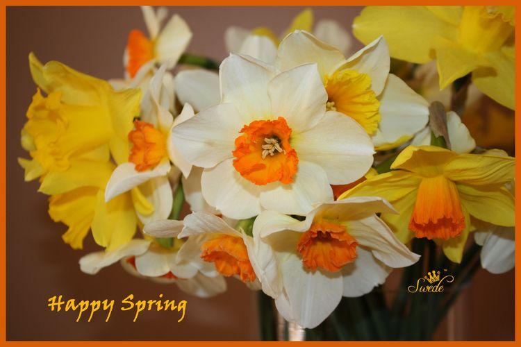 Happy spring 4 x 6