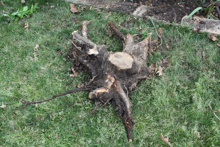 Stump out