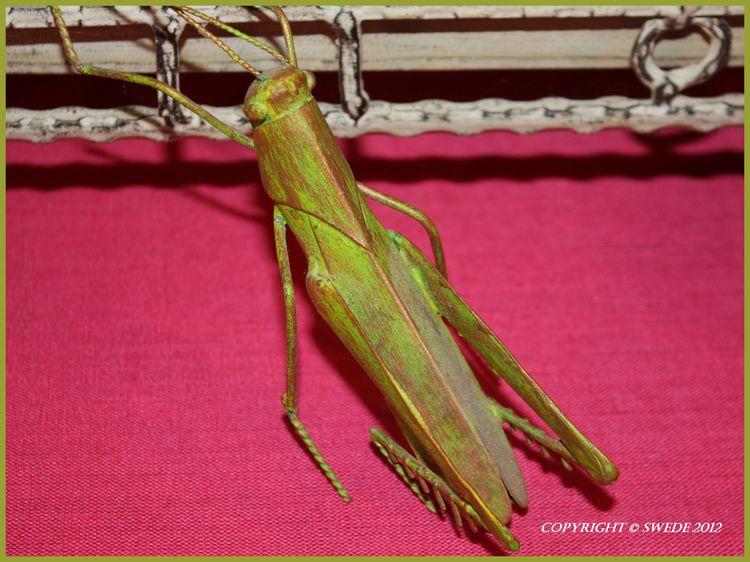 Grasshopperlogo