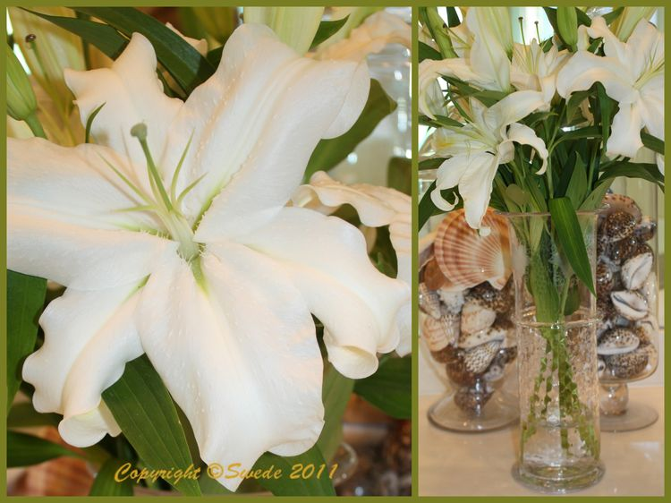 White lily collage logo
