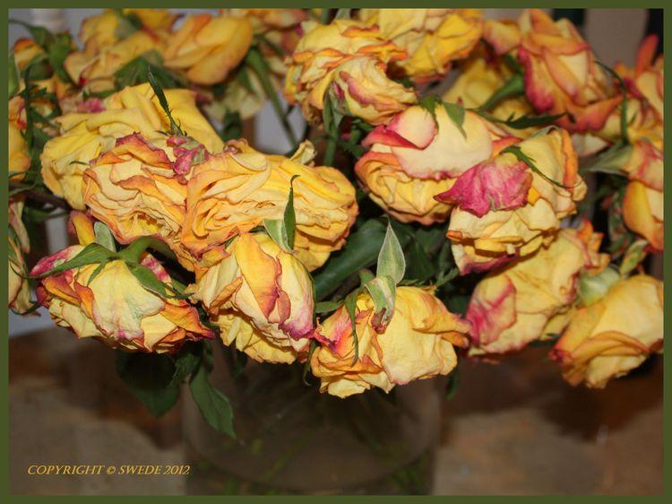 Golden roses fading logo