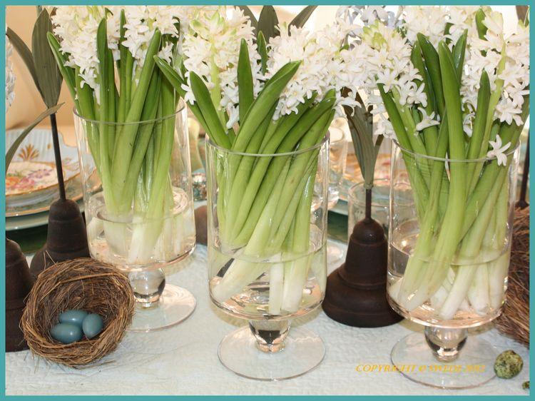 White hyacinthslogo