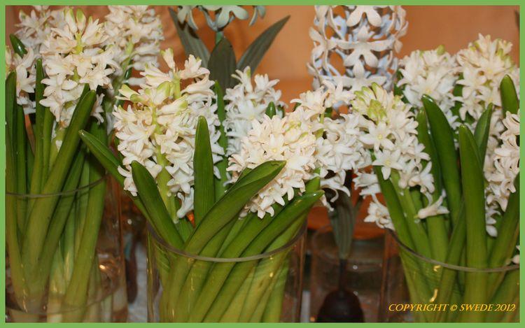 Fragrant flowers logo