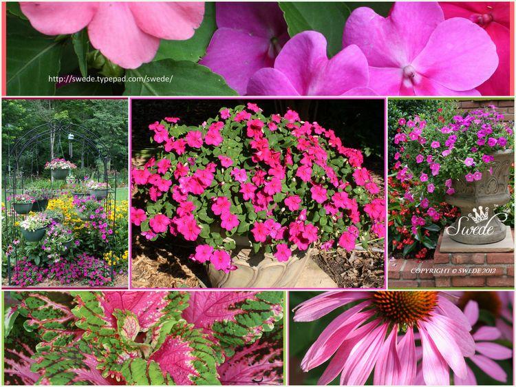 Pink color collagelogo