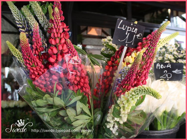 Paris Florist Lupines for Marlis