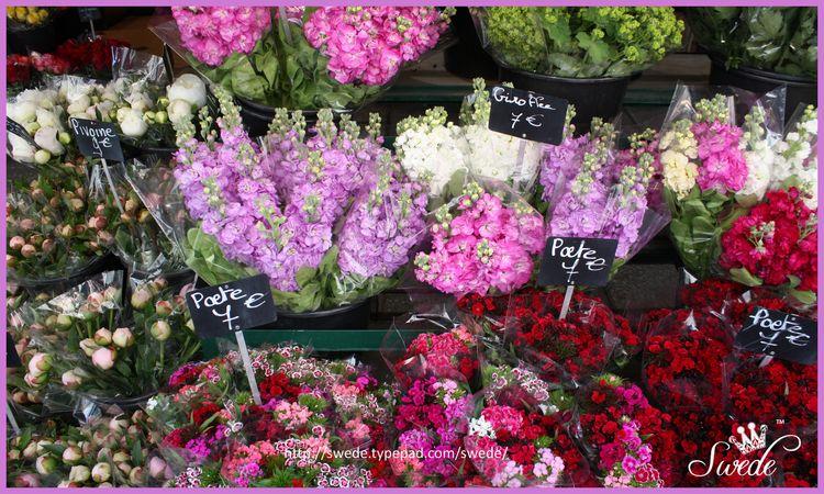 Paris Florist sweet william stock peonies logo