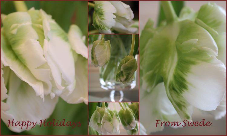 Tulip xmas collage happy holidays