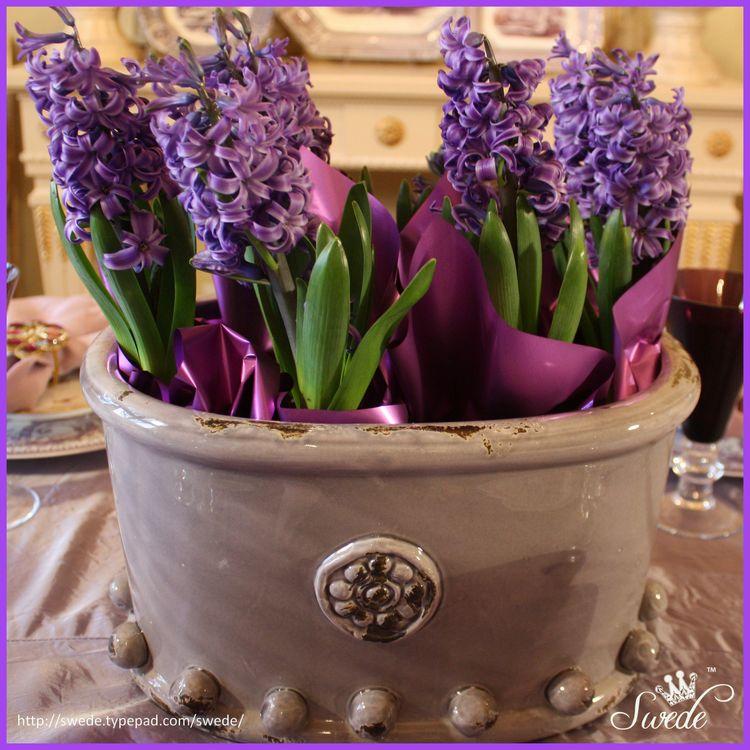 Hyacinth potlo