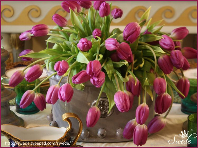 All tulips lo