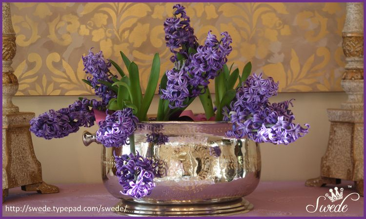 Hyacinths last for season bor lo