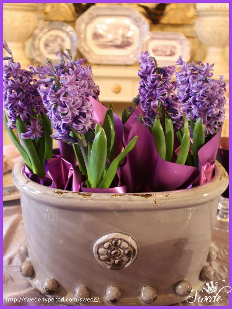 Purplelo