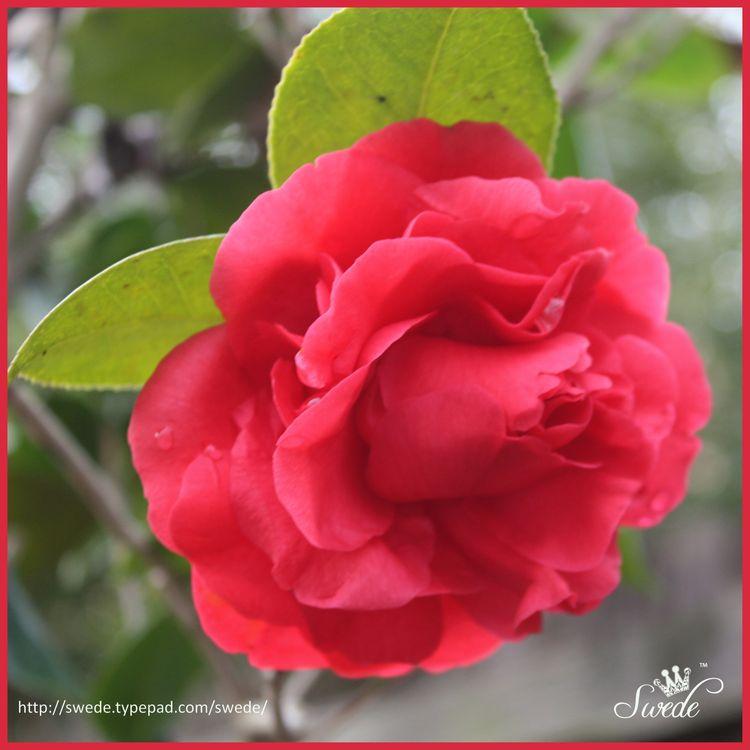 Flower 2 lo