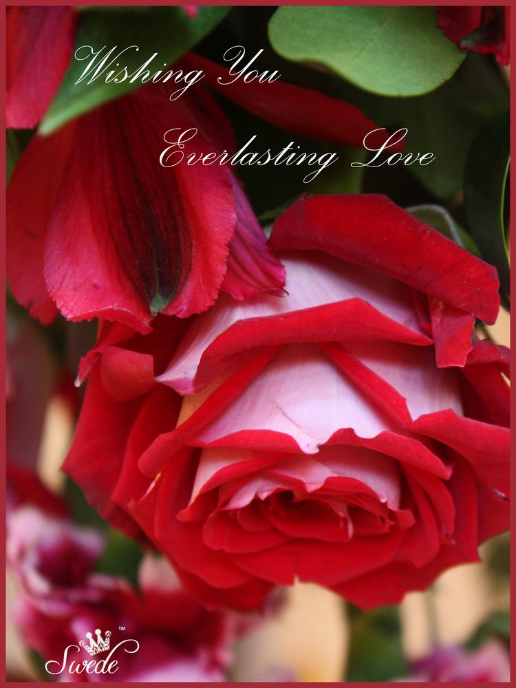 Everlasting Love Valentine