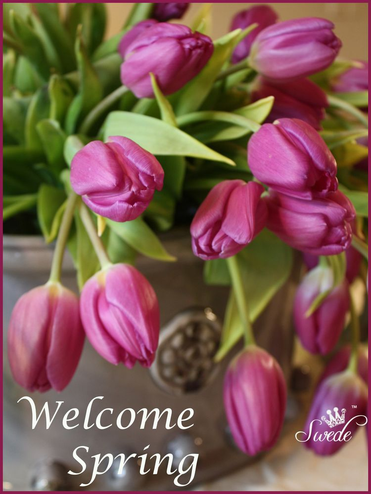 Welcome spring logo