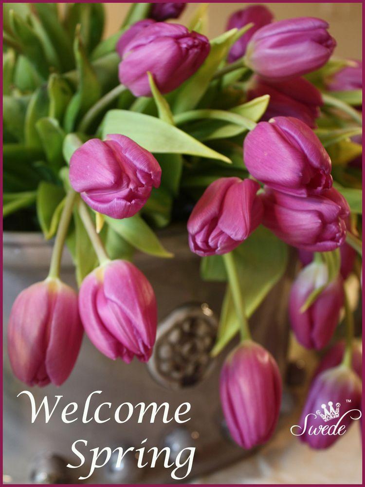 Welcome spring logo