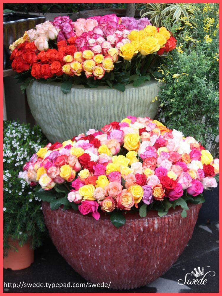 2013 05 Paris Flowers bowls of Roses lo