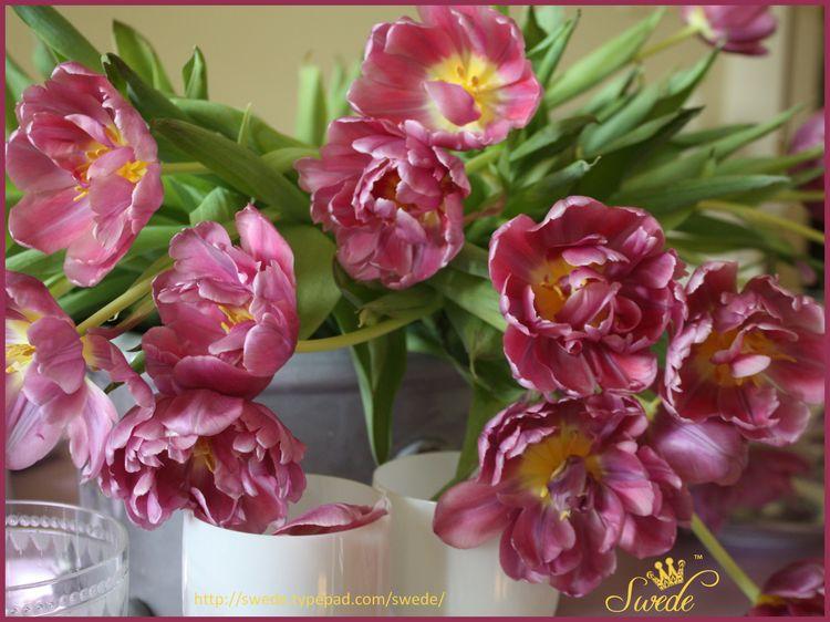2013_08_091 tulips logo