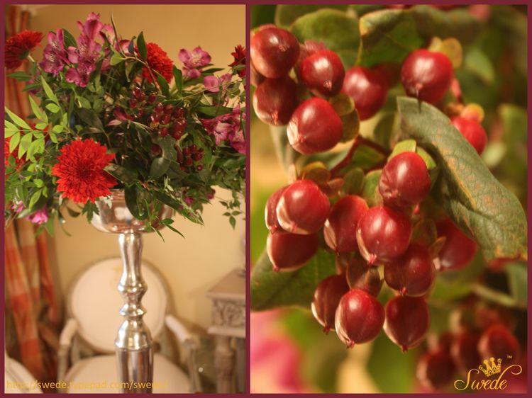 Hypericum berries logo