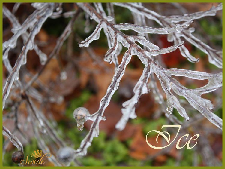 Ice wordlogo