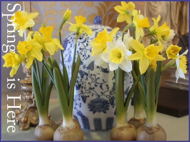 Daffodils First 2016 Spring is Here