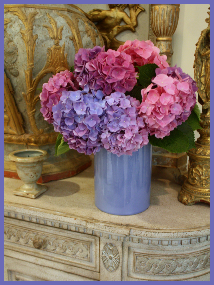 Blue Purple Hydrangea Season